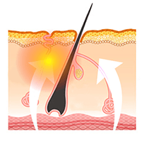 omono skin absorption diagram
